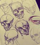 Skulls Sketches