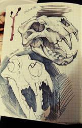 004/365 - Barbary Lion Skull by NesoKaiyoH