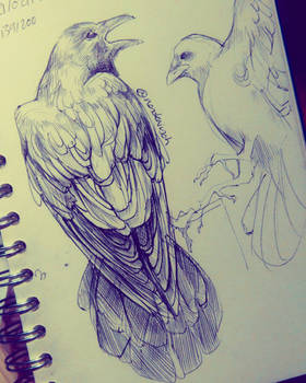 Crow Studies 1