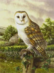 Barn Owl with Woodmouse