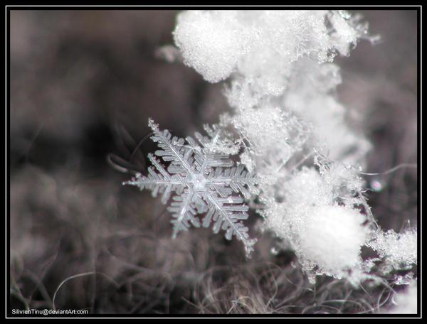 Winter Magic by SilivrenTinu