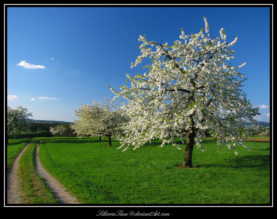 Spring is Waiting... by SilivrenTinu