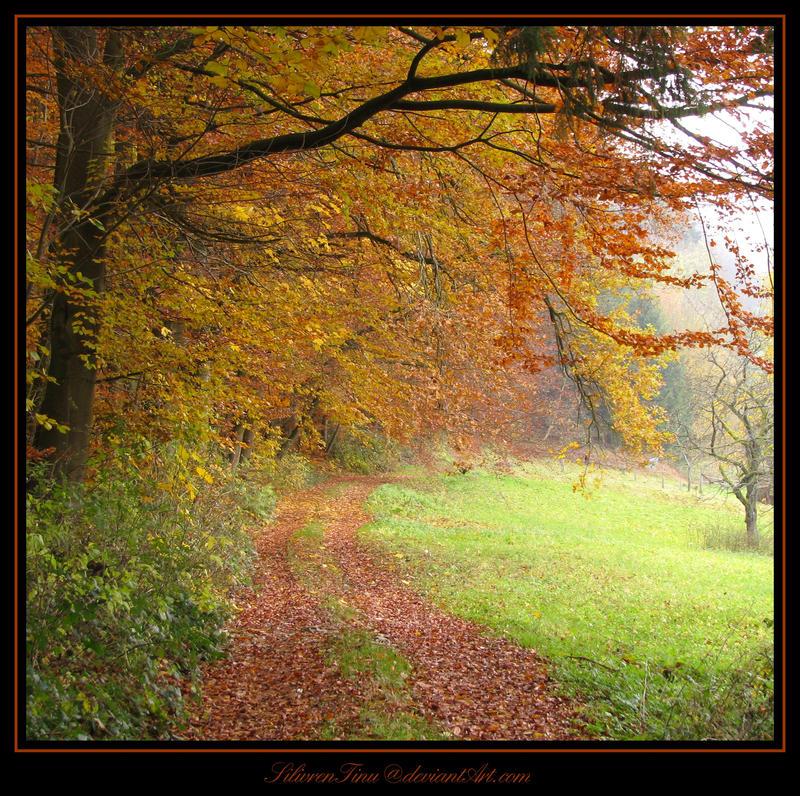 Autumn Path by SilivrenTinu