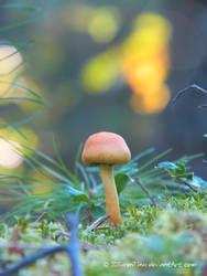 Little Autumn Shroom