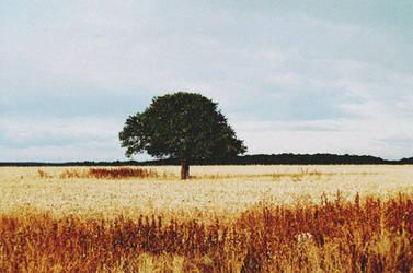Field Noise Tree