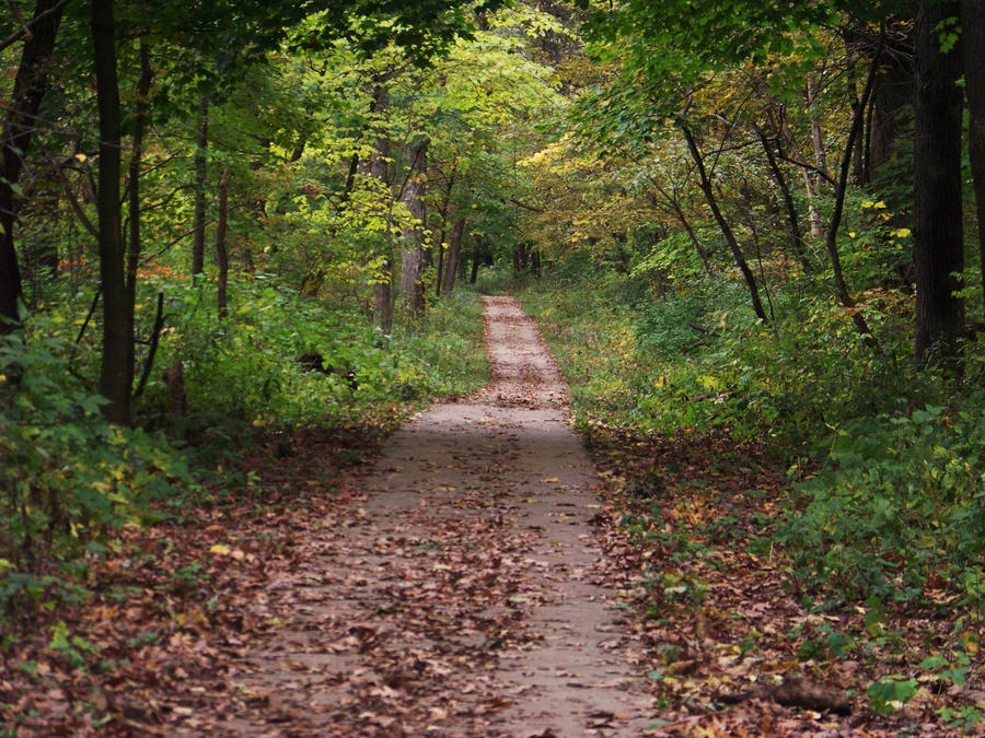 a worn path by eudora welty essay A worn path most popular coming along a path through the pinewoods eudora welty was a short story writer and novelist known for her portrayals of the.