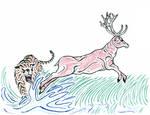 Swamp Deer - Barsingha