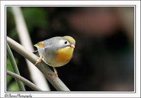 More birds 1 by CharmingPhotography