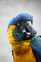 Parrot by CharmingPhotography