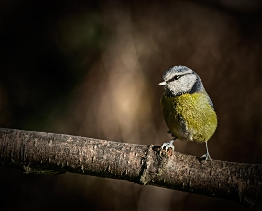 Bird on a stick by CharmingPhotography