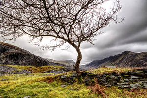 Another tree in Llanberis by CharmingPhotography