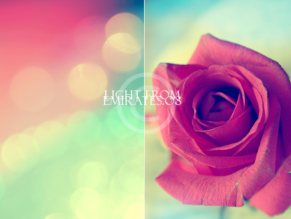flower calm colors 2 by light from emirates on deviantart