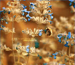 :: Bee ::