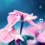 Nature tears.  . ..