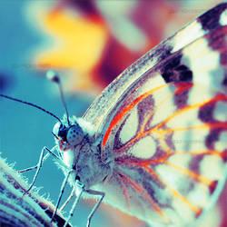 Butterfly. ..