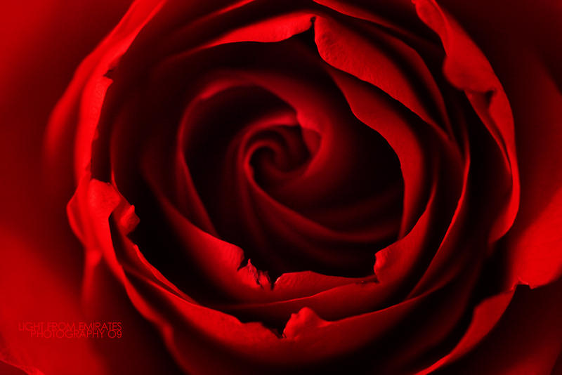 Red Rose . .. by light-from-Emirates