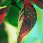 leaf . ..