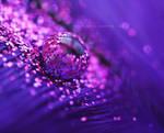 pink - glitters