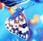 Butterfly II . . ..