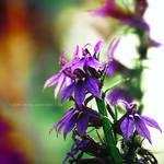 violet flower . ..