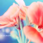 Soft flower . .. .