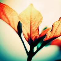 Autumn Leaves . . ..