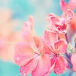 pink flower . . ..