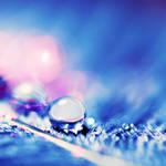 shiny blue - drop . ..