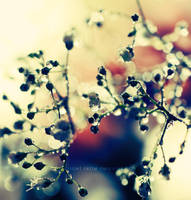 Baby's breath .. . by light-from-Emirates