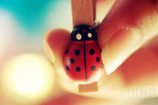 Ladybird . ..
