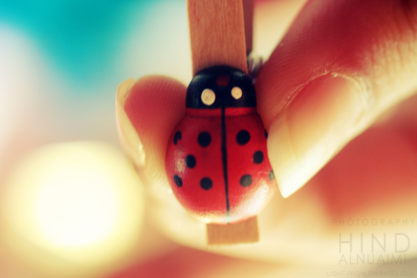 Ladybird . .. by light-from-Emirates