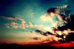 the sky . ..