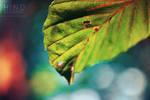 Colourful Nature . ..