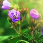 Taste of spring. ..