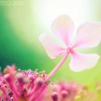 Soft dream. ...