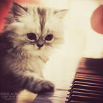 I will play the song for you..