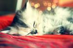 Sweet dreams. ..