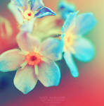 Forget me not. ..