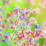 Colors of L i f e. ..
