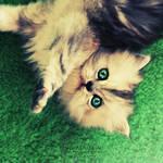 Hello Kitty. ..