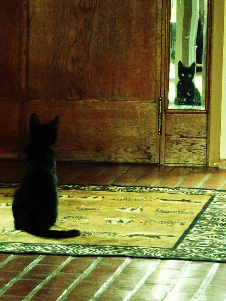 Black Cat by dreamingdecembers