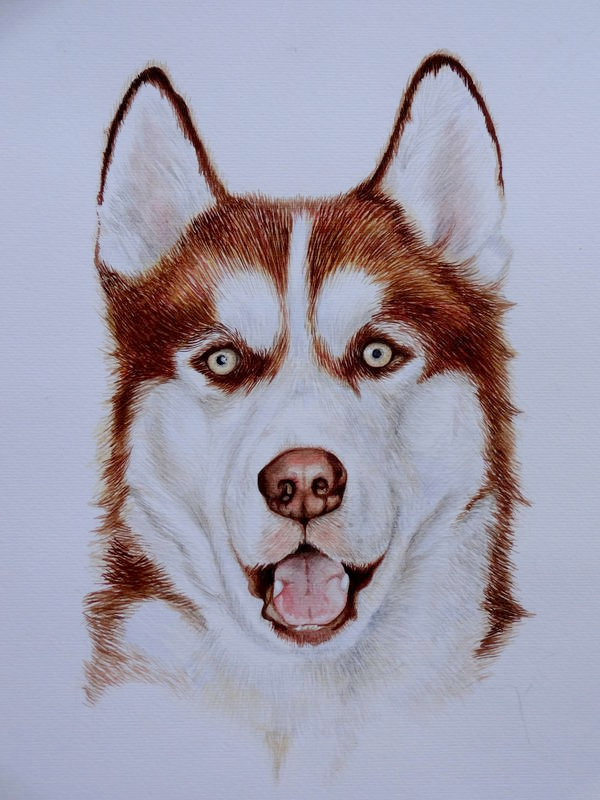 Siberian Husky Khan Watercolour Portrait by Ezekiel-J