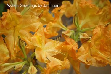 Azalea Greetings by Janinaart