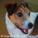 So happy dog by Janinaart