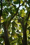 Tree alchemy
