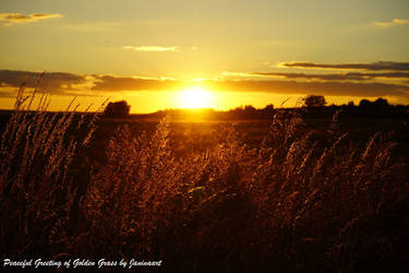 Peaceful Greeting of Golden Grass