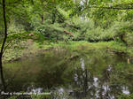 Pond of hidden secrets
