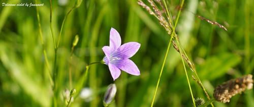 Delicious violet