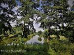 Tree couple on the pond