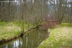 Spring pond message